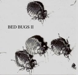 Bed Bugs II
